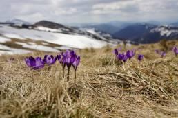 La primavera en Reino Unido e Irlanda